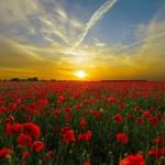 Pipacsos rét felett lemegy a nap - van nap a nincsúj fölött cikk főimidzse